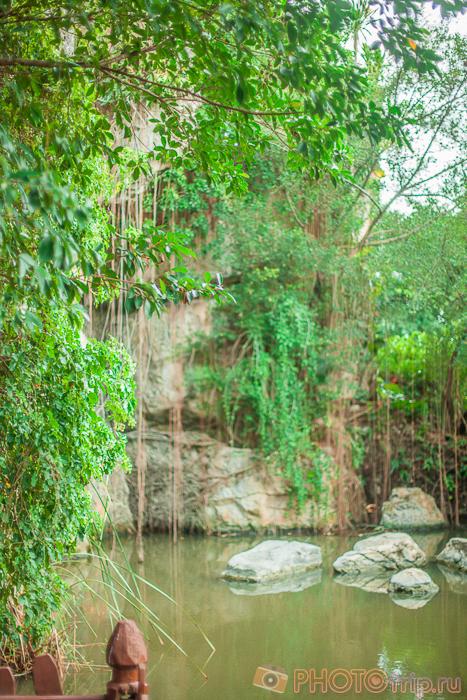 Красивый пруд в Dream World