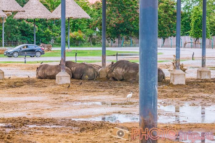Носороги в Сафари Парке в Бангкоке