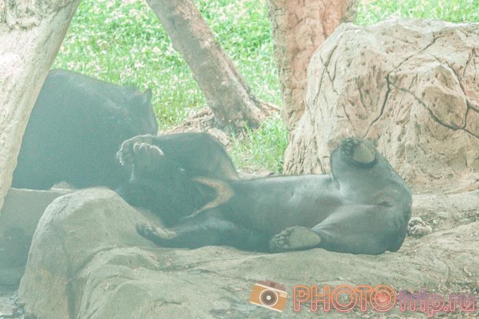 Медведи в Сафари Парке в Бангкоке