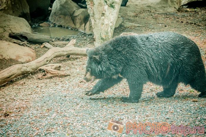 Медведь в Сафари Парке в Бангкоке