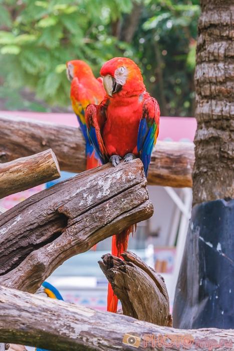 Попугаи на входе в Marine Park в Бангкоке