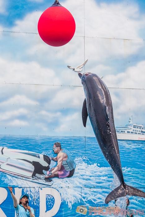 Шоу дельфинов в Сафари Парке в Бангкоке