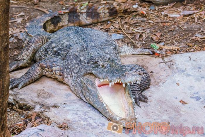 Крокодил в Marine Park в Бангкоке