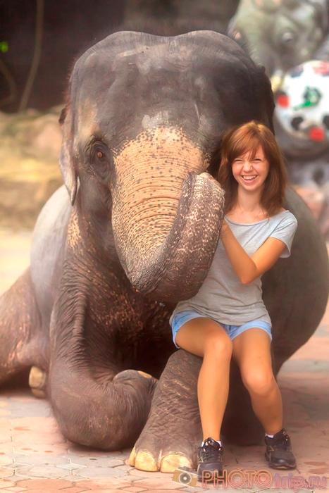 Слон в Сафари Парке в Бангкоке