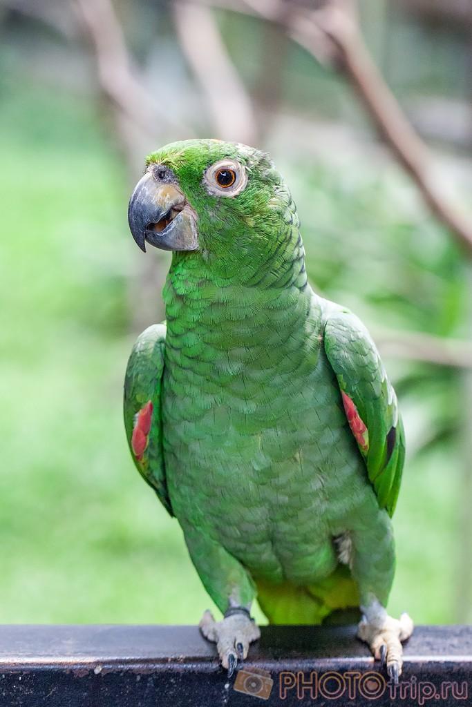 Трогать птичек нельзя, хоть они и сидят так близко